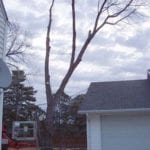 23 limb over garage