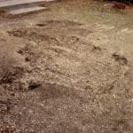 43 stump hole