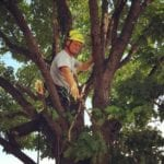 Brad Reis cleaning out a tree2